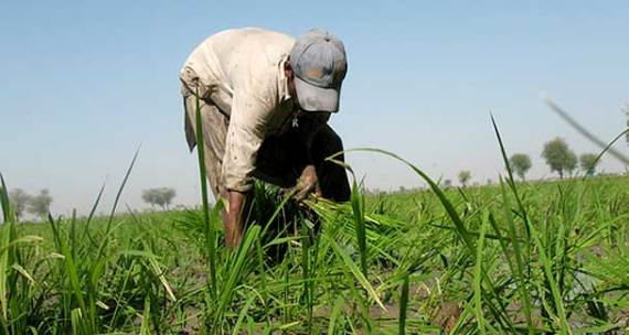 The draft policy, as reported last week, does not say anything on weakening the rural power structure. - File photo