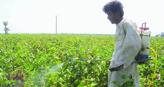 pesticide-umerkot-608