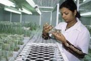FAO calls for a new approach to agricultural research